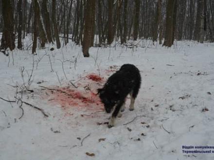 Історія, яка шокує! Собаки згризли голову жінки