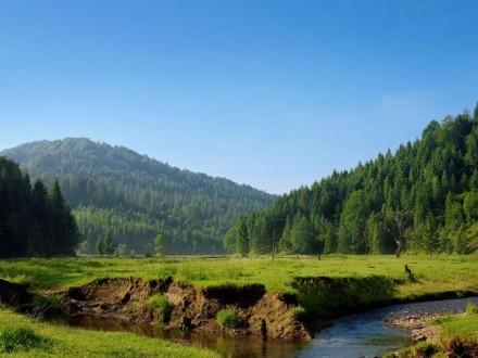 Близько 20 тисяч дерев висадять в парках Карпат