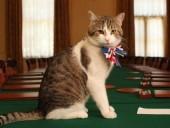 """Кота Ларри хотят освободить от должности """"главного мышелова"""" на Даунинг-стрит"""