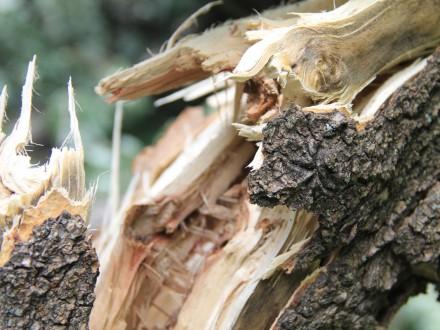 Через негоду в Дніпрі впало 2,6 тис. дерев