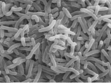 Через епідемію холери у Ємені оголосили надзвичайний стан