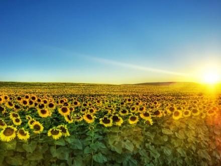 23 травня вУкраїні температура повітря досягне +23…+25 градусів