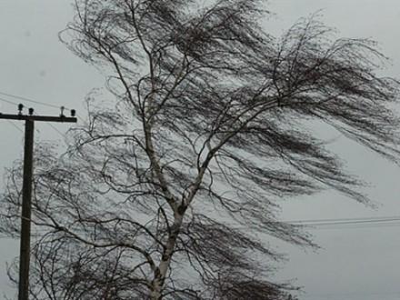 УКиєві до кінця доби очікуються пориви вітру 15-20 м/с