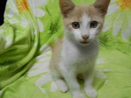 Зазнущання над кошенятами хлопець потрапив за ґрати