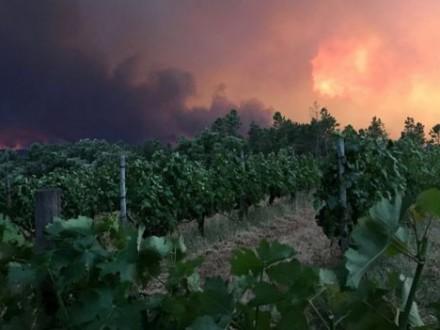 Лісові пожежі вПортугалії забрали вже 19 життів