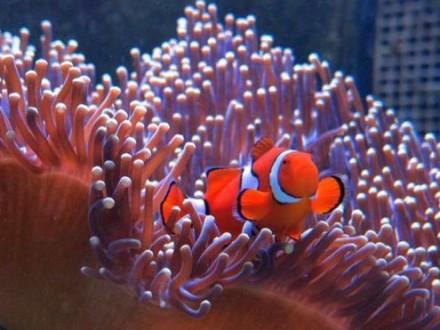 Великий бар'єрний риф вАвстралії оцінили упонад $40 млрд