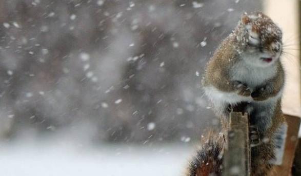 НаУкраїну насуваються хуртовини зі снігом