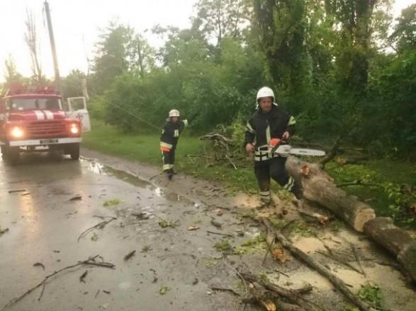 УКиївській області жінка загинула після падіння дерева