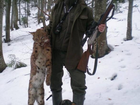 ВКарпатах лісничі застрелили червонокнижну рись— мережа лютує