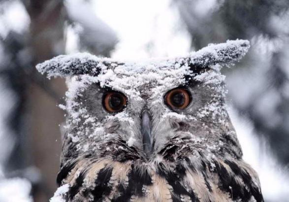 Сьогодні в Україні мокрий сніг та дощ