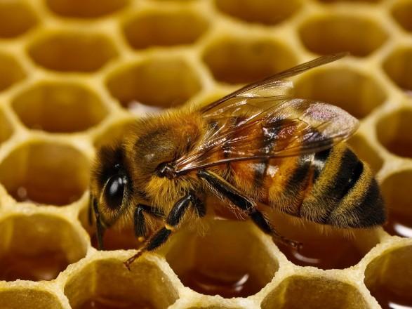 Новий рекорд з експорту меду: Херсонщина – лідер