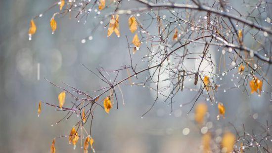 Погода на Різдво: дощі таожеледиця