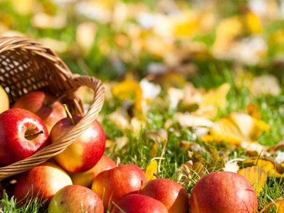 Синоптики розповіли, як погода вплине на врожай фруктів