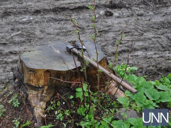 У 2017 році на Закарпатті незаконно вирубали лісу на 11 млн грн