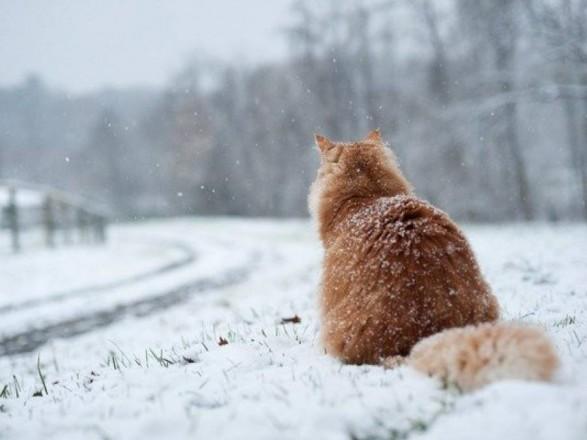 Погода на16 березня: вночі вУкраїну повернуться морози (КАРТА)
