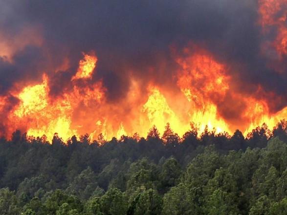 У Нікарагуа за тиждень лісова пожежа знищила 900 га лісу