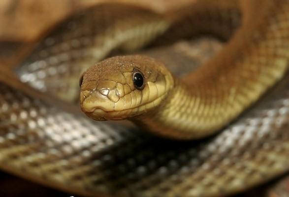 Закарпаття не має жодної вакцини проти укусів змій
