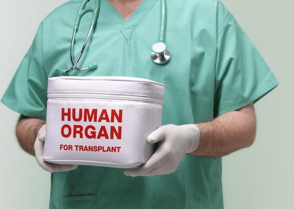 В Раді пояснили як буде відбуватися трансплантація органів в Україн