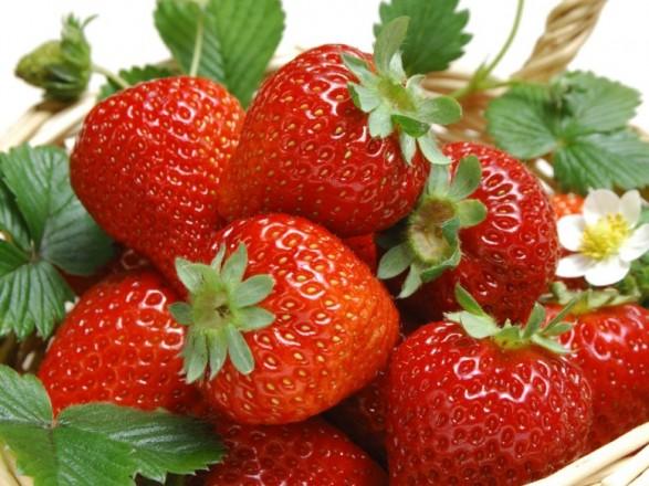 УПольщі може згнити майже половина врожаю полуниці через нестачу заробітчан-українців