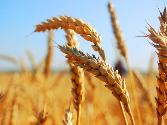 Аграрії вже зібрали 16,7 млн тонн зерна