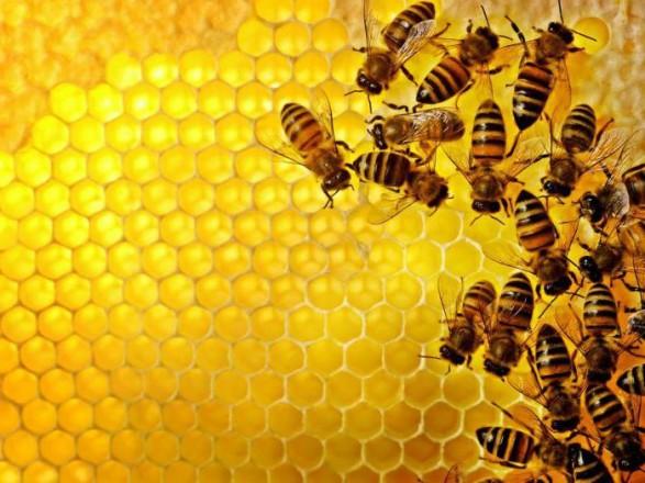 Держпродспоживслужба та пасічники обговорили спільні дії в питаннях врегулювання актуальних проблем галузі бджільництва