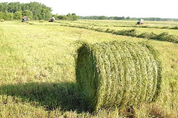 Президент підписав закон щодо стимулювання сімейних фермерських господарств