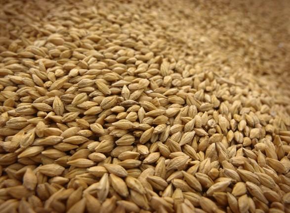 Аграрії намолотили вже 33,6 млн тонн зерна