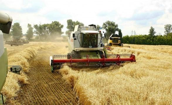 Аграрії зібрали ранні зернові з 99% засіяних площ