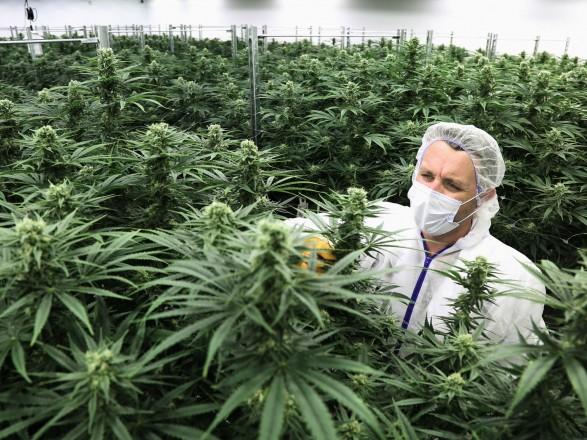 Заправить марихуану как вырости из семя коноплю