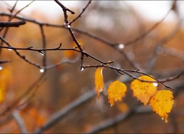 В Україну повертається осінь – синоптик