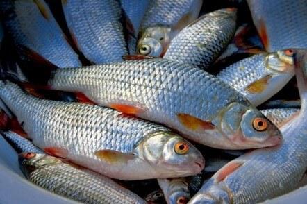 Експерт порадив, як зберігати рибу – новини на УНН   30 грудня 2018, 21:18