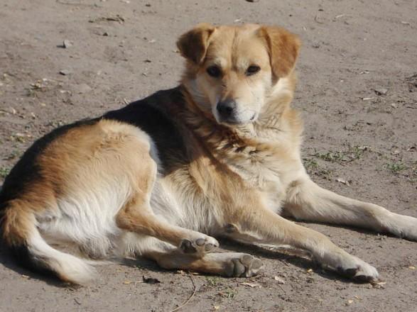 У Чернівцях відкрили кримінальне провадження через вбивство собак