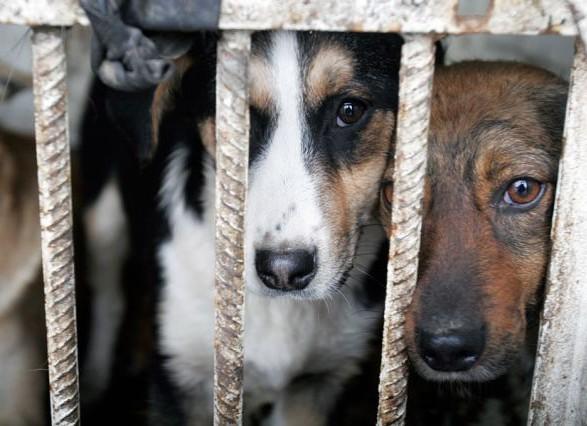 За січень-лютий 2019 року в Україні зафіксовано понад 40 випадків жорстокого поводження з тваринами