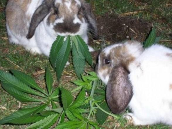 Новости животные и конопля марихуаны куст искусственный