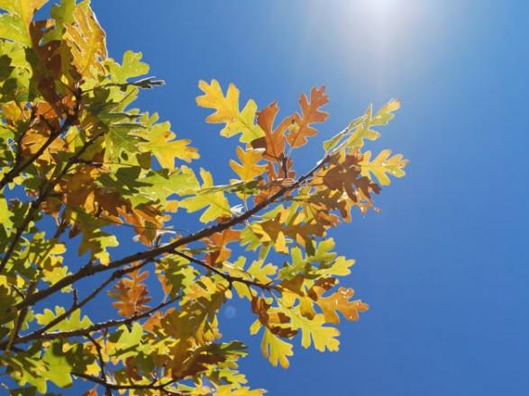 Завтра в Україні очікується суха погода
