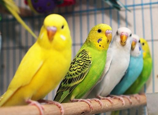 В Харькове в лесу нашли 50 больных попугаев