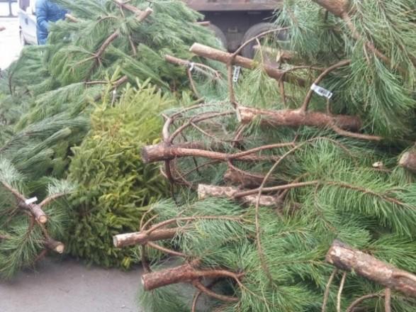 С начала года в столице сдали на переработку более 14 тыс. елок