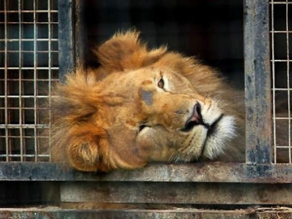 Мінкульт розробив законопроект про заборону тварин у цирку
