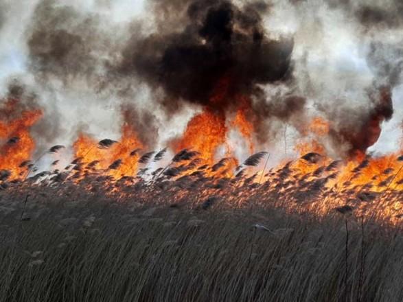 В Житомирской области в течение суток возникло 25 пожаров сухостоя