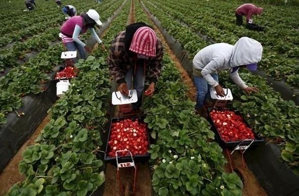 Польша ослабила карантин для сезонных рабочих