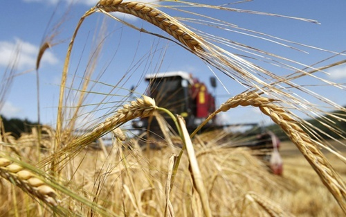 Парламентариям рекомендуют принять законопроект о создании фонда гарантирования кредитов в сельском хозяйстве