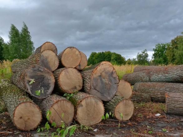 В Краматорске четырех работников лесхоза подозревают в незаконной вырубке на около 1,4 млн грн