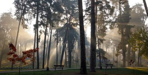В Киеве продолжается реконструкция пяти парков - Кличко