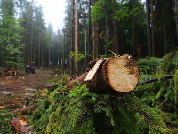 Шмыгаль: в Украине посадили больше лесов, чем вырубили