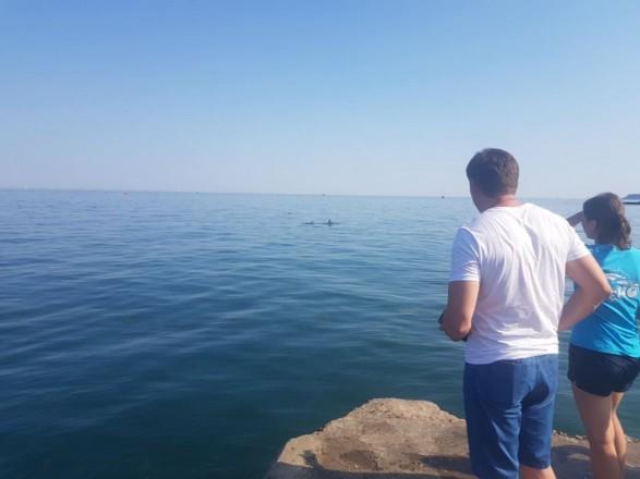 На одесском пляже застряла группа дельфинов: их пытаются спасти