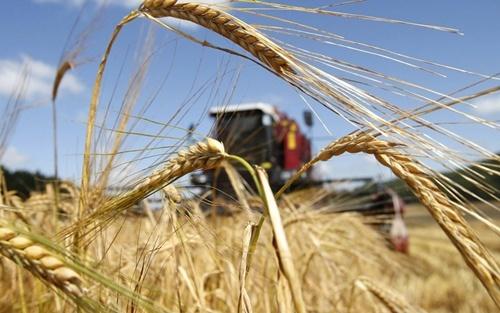 Рада приняла законопроект о сельскохозяйственной кооперации