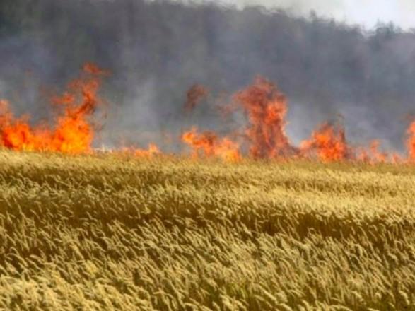 В Луганской области пожар выпалил 40 га пшеницы
