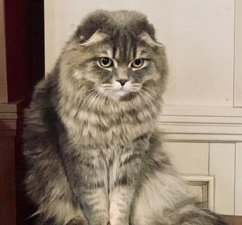 """Зеленская показала своего """"нерадостного"""" кота"""