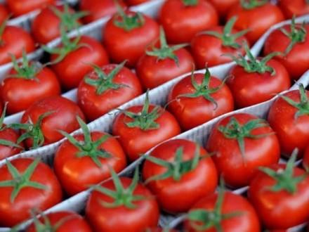 Украина почти удвоила импорт помидоров