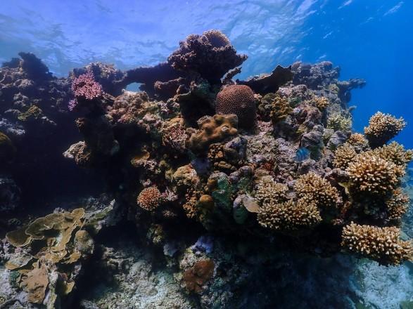 Большой Барьерный риф потерял половину кораллов за последние 25 лет